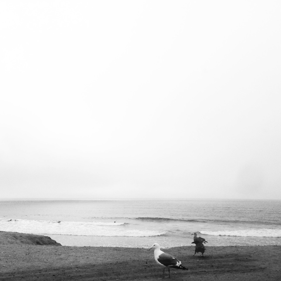 Birds, waves and fog. A thinking Sunday. #sanfrancisco #oceanbeach #sundaysolitude